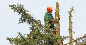 tree removal in Green Gully
