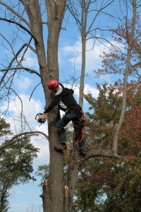 arborist Smythes Creek